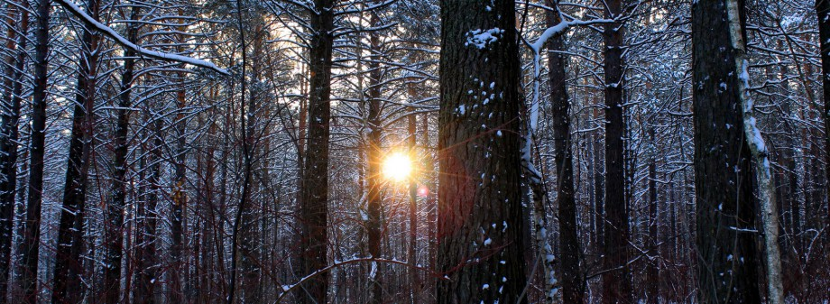 cropped-17404-sun-through-the-winter-forest-1920x1080-nature-wallpaper