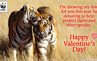 vday_donationform_tigers