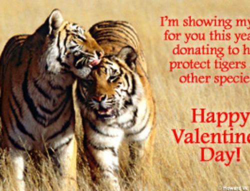 Have a Very Happy Valentine's ~and give a hand to Wild Life Too!