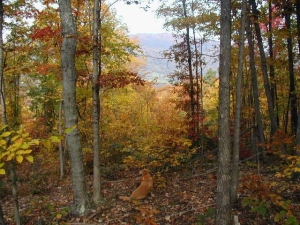 Four Shields Seasonal Initiation for Autumn